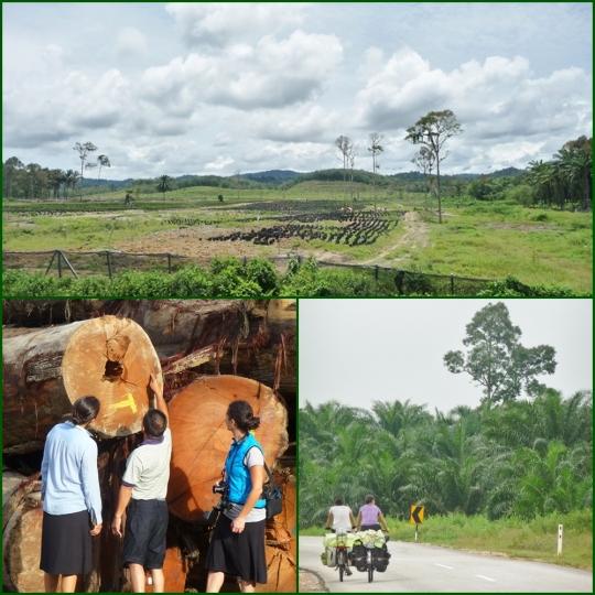 DEforestazinua